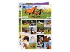 Pexeso MFP 3xA4 Koně